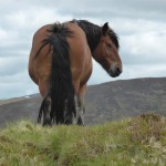 gite du puy mary-cantal-animaux-chevaux-equitation (6)