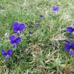 gite du puy mary-cantal-flore (13)