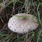 gite du puy mary-cantal-flore (8)