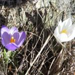 gite du puy mary-cantal-flore (9)