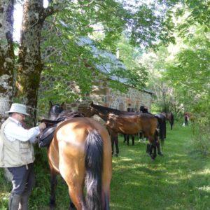 gite du puy mary-cantal-balade equitation (4)