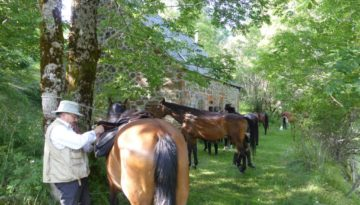 gite du puy mary-cantal-balade equitation (4)